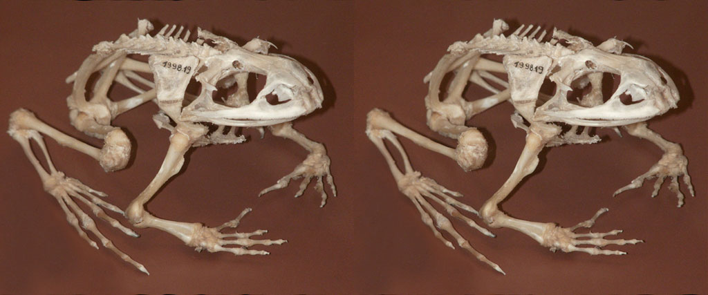 skeletonfrog
